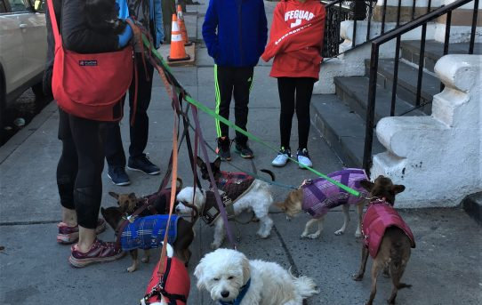 Dog Walker, Upper West Side