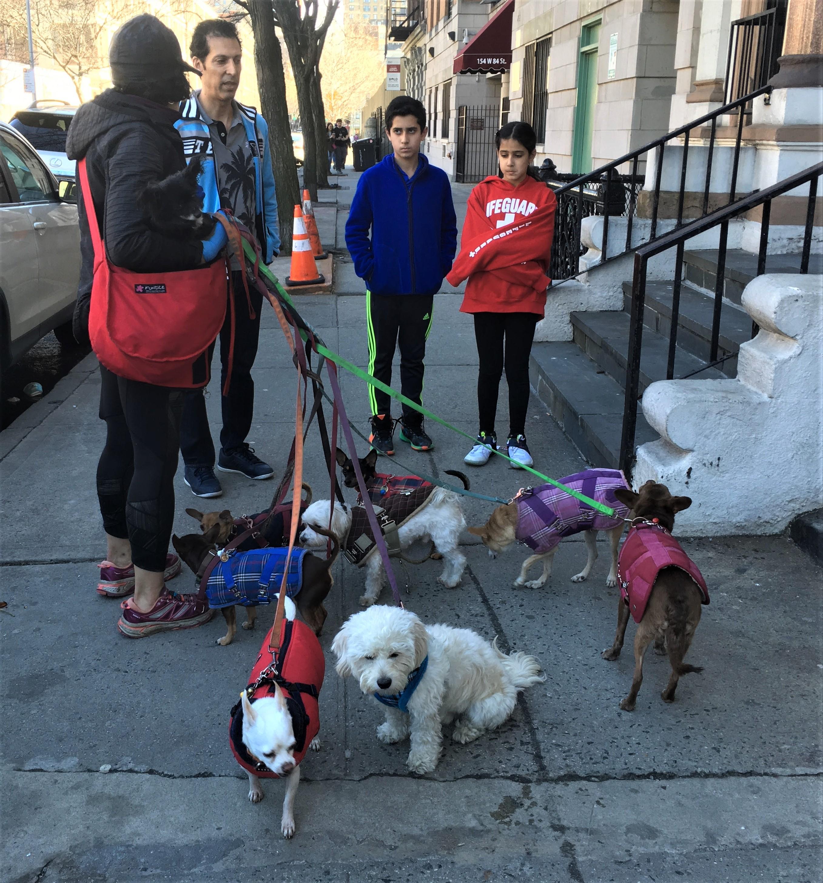 Dog Walker, Upper West Side