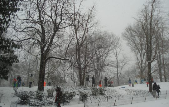 The First Snow Fall