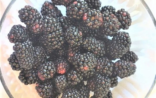 Never Too Many Blackberries