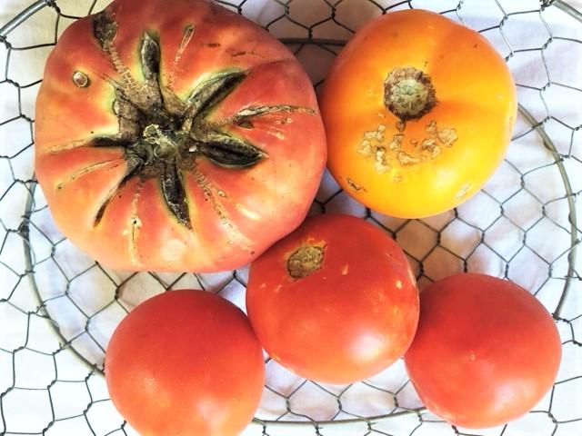 Goldie Hawn's Tomato Sandwich